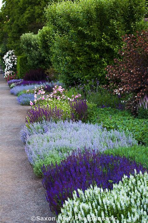 25 best ideas about border plants on pinterest front yard garden design front yard flowers