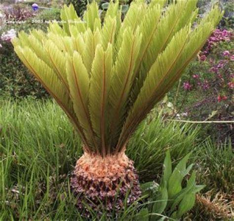 piante da mettere in giardino quali piante mettere in giardino durino tutto l anno