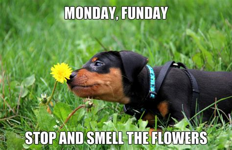 Monday Dog Meme - cute puppy figment says monday funday get outside play