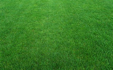 grass green color lawn great green color