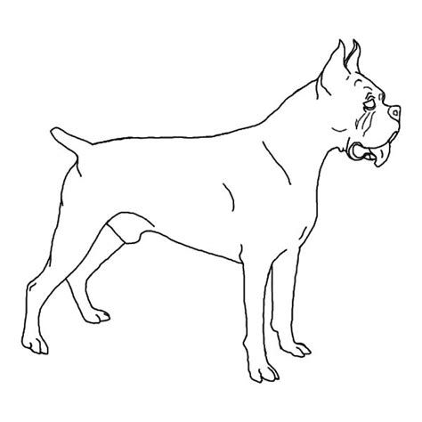 boxer dog face coloring pages