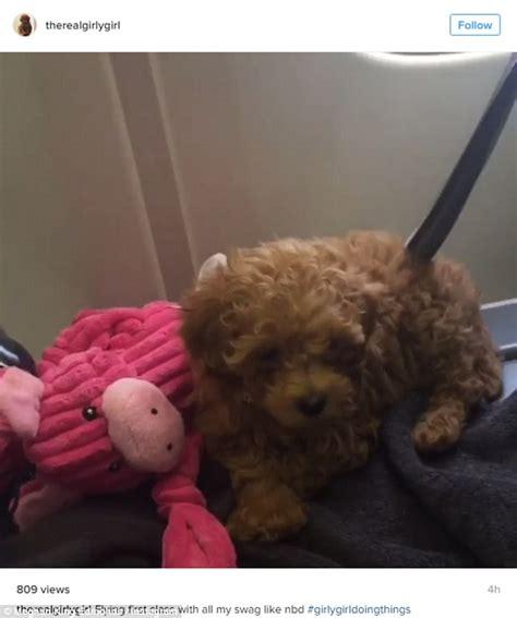 goldendoodle puppy nyc rhoc s meghan king edmonds adopts teacup goldendoodle
