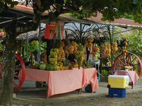costa rica turisti per caso frutta della costa rica viaggi vacanze e turismo