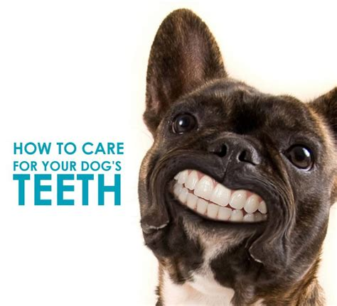 how to care for a puppy how to care for your s teeth allivet pet care