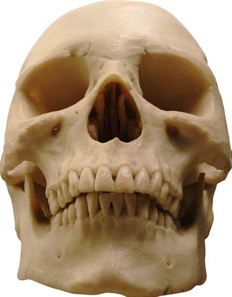 skeleton skulls png images free