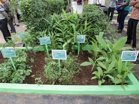 taman tanaman obat keluarga toga tanaman  tanaman obat