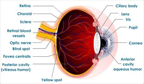 how do you a seeing eye how does the eye see color 28 images how we see in color 8th grade science 25 2