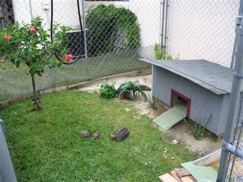 backyard turtle habitat 17 best images about for the turtles on