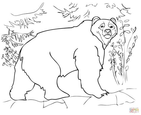 Kodiak Bear Coloring Page | kodiak bear coloring page free printable coloring pages