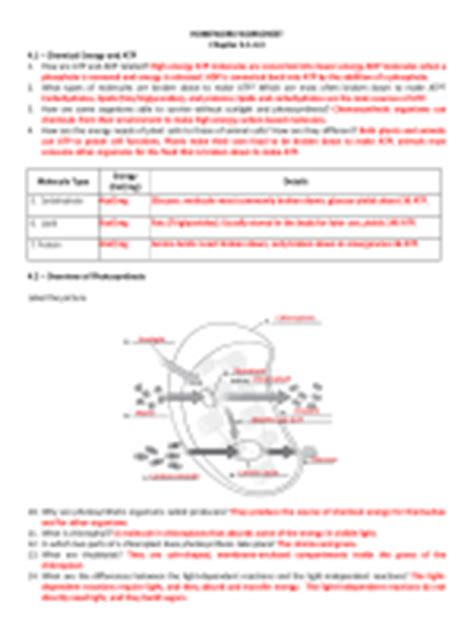section 8 2 photosynthesis worksheet answers ch 8 photosynthesis mr hoyles science page
