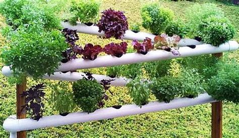 diy pvc gardening ideas  projects beesdiycom