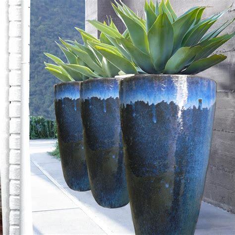 agave vaso agave attenuata ou agave drag 227 o em vaso vitrificado r 1