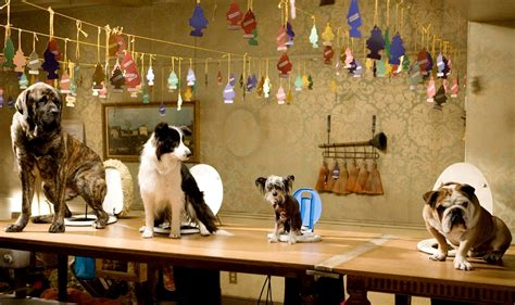 hotel for dogs hotel for dogs picture 18