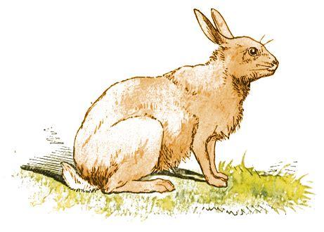R Rabbit rabbit ears pricked animals r rabbit rabbit 2 rabbit