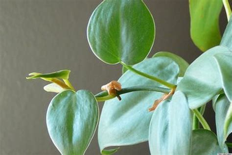Houseplants by 10 Best Houseplants To Purify The Air Photos