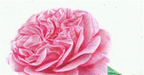 tutorial menggambar mawar menggambar bunga mawar dengan pensil warna teknik menggambar