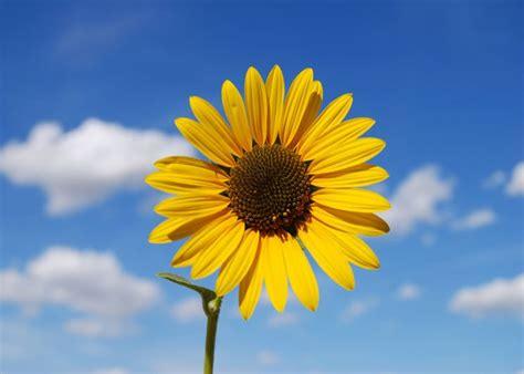 il linguaggio segreto dei fiori dizionario significato