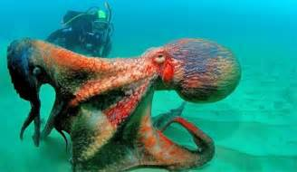 Octopus L A Of Scientists Claim Octopuses Might Be Aliens