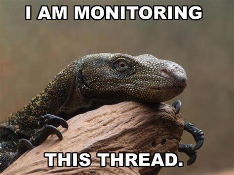 Lizard Meme - monitoring this thread