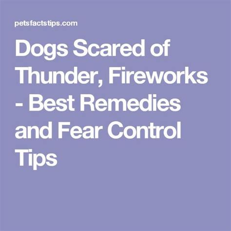 59 Best Phobias Images On by The 25 Best Scared Of Fireworks Ideas On