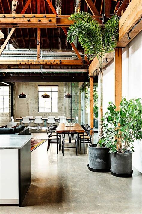 decorate  large indoor plants   home
