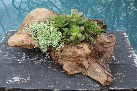 Driftwood Planters For Sale by Driftwood Planters Garden By Debbie