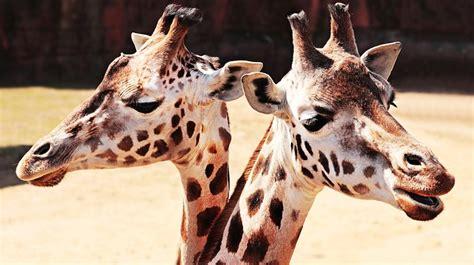 giardini zoologici animali selvatici e giardini zoologici studio legale