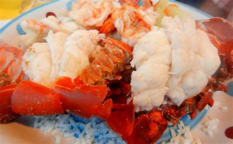 grand shrimp house shrimp house maro s house drink the bulldog picture of maro s shrimp house cabo san