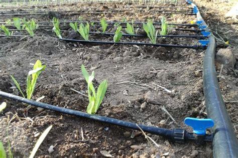 come fare impianto irrigazione giardino come fare un impianto di irrigazione per un giardino 28