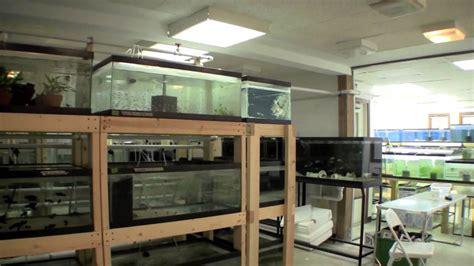 Room Setup Ideas ted s new fishroom aquariums youtube