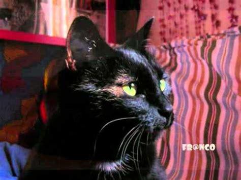 il pufoente testo gatto matto doovi