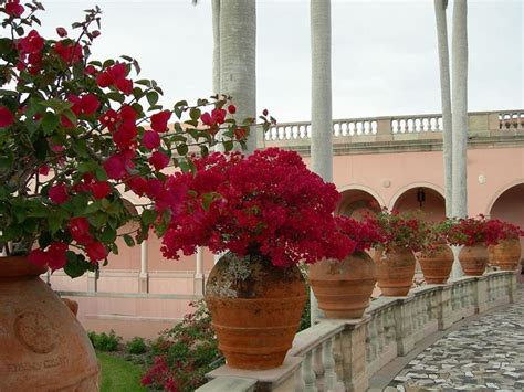 vasi di terracotta da esterno vasi esterno vasi da giardino modelli di vasi da esterno