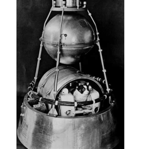 laika space image gallery sputnik 2 laika