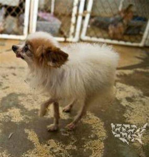 list of puppy mills in ohio humane society missouri still has nation s worst puppy