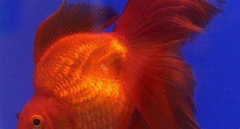 pesce alimentazione pesci alimentazione mangimi