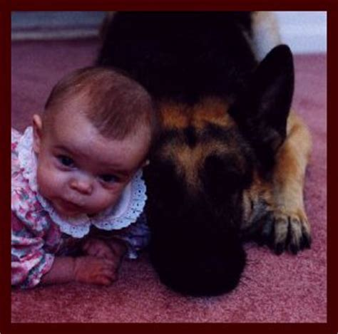 baby german shepherd for sale german shepherd puppies for sale german shepherd breeders