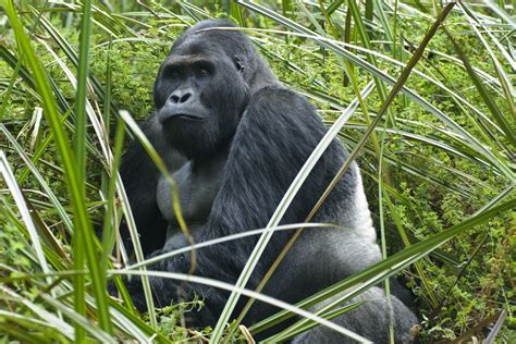Meet the planet's 25 most endangered primates   MNN ...