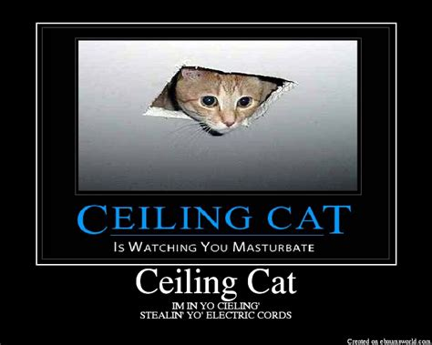 Cat Ceiling by Ceiling Cat Picture Picture To Pin On Thepinsta