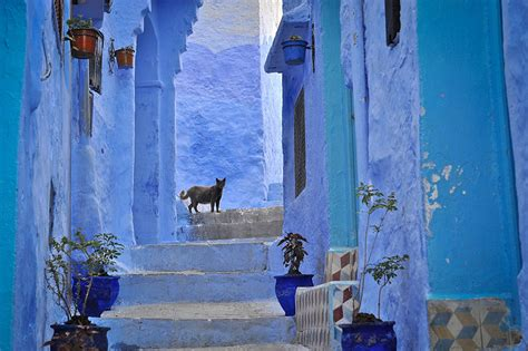 this town in morocco is covered in blue paint bored panda