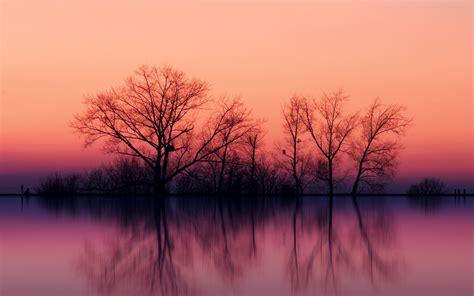Pflanzen Und Bäume 2275 by Rosa Himmel Dunkle B 228 Ume Sea Hintergrundbilder Rosa