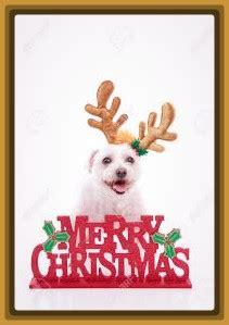 imagenes feliz navidad con perros imagenes de feliz navidad con perritos archivos imagenes