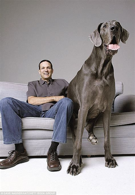 george s dogs quot george quot world s tallest dies at home science technology nigeria