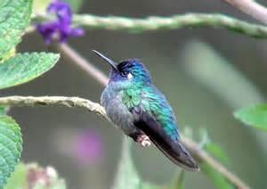 a few highlights from costa rica birding at ujarras
