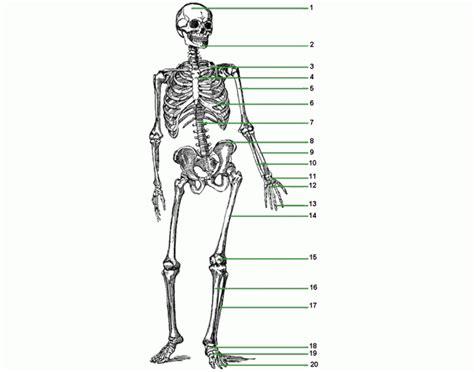 game of bones bone human skeleton quiz questions defenderauto info