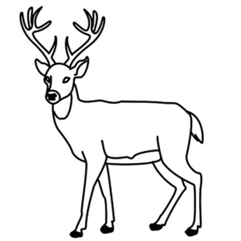 how to a deer how to draw easy deer