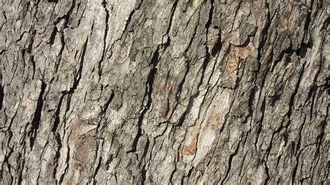free images nature branch wood texture trunk