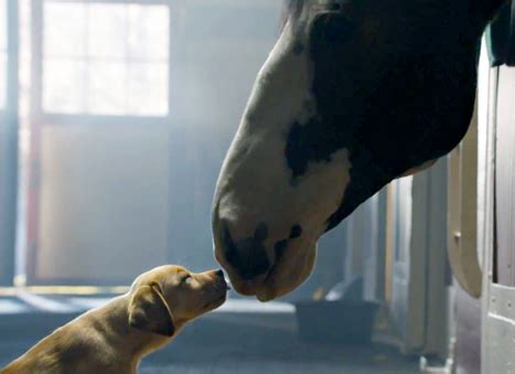 budweiser puppy commercial 2013 budweiser quot puppy quot bowl commercial best buds ad now