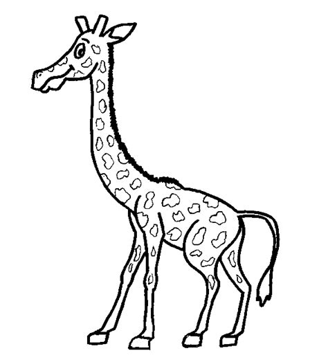 desert animals coloring pages coloringpagesabc com