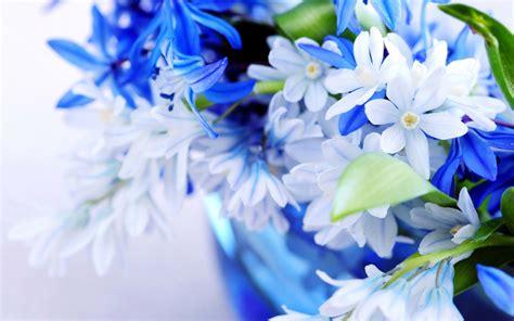 white blue flowers flowers wallpaper 33698267 fanpop