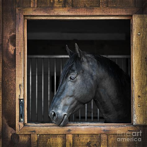 The Stable Home Decor Horse In Stable Photograph By Elena Elisseeva